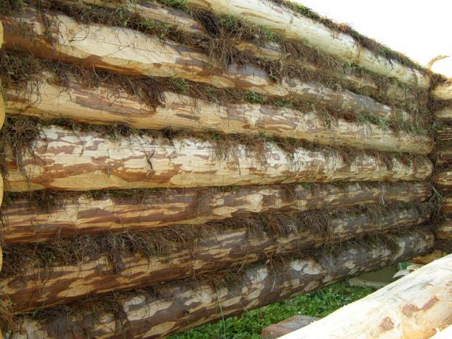 межвенцовый мох-утеплитель