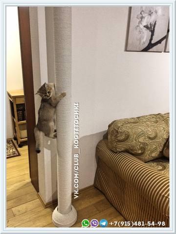 Когтеточка для кошки до потолка