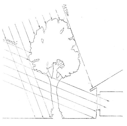 Принцип защиты окон, обращенных на южную часть горизонта, от прямых солнечных лучей при помощи деревьев