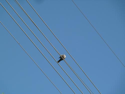 Ввод электроэнергии в здания